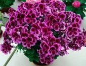 Миниатюра к статье Маленькая хитрость: чтобы цветы в доме цвели пышно и долго!