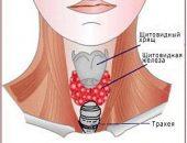 Миниатюра к статье Лечение щитовидки народными средствами