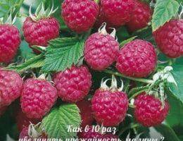 Миниатюра к статье Как получать супер-урожаи малины, смородины, крыжовника, вишни?