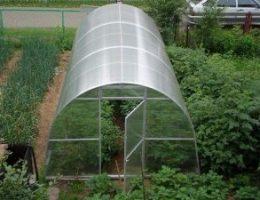 Миниатюра к статье «Маленьких хитростей» хорошего урожая в теплице
