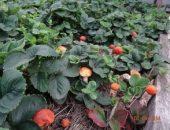 Миниатюра к статье Как сеять грибы