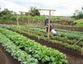 Миниатюра к статье Овощи, которые стоит посадить рядом друг с другом