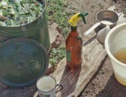 Миниатюра к статье Борьба с вредителями сада осенью
