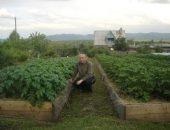 Миниатюра к статье Удивительный огород Игоря Лядова