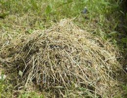 Миниатюра к статье Как превратить скошенную траву в компост или мульчу