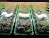 Миниатюра к статье Как приготовить стимулятор роста растений в домашних условиях