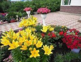 Миниатюра к статье С такими подкормками ваши цветы будут расти как на дрожжах