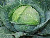Миниатюра к статье Валериана спасет капусту. Совет огородника