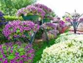 Миниатюра к статье Формула обильного цветения ПЕТУНИЙ