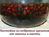 Миниатюра к статье От миомы и кисты настойка из кедровых орешков