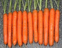 Миниатюра к статье Секрет выращивания моркови!