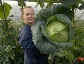 Миниатюра к статье Несколько слов о капусте
